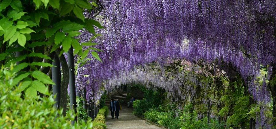 Bardini Gardens Florence Italy