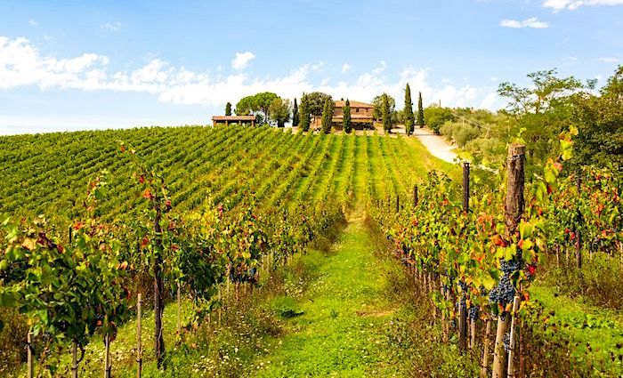 the tour guy wine regions tuscany