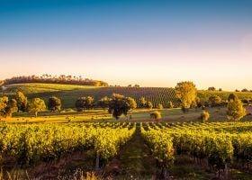 Top 9 Vineyards to Visit in Bordeaux, France