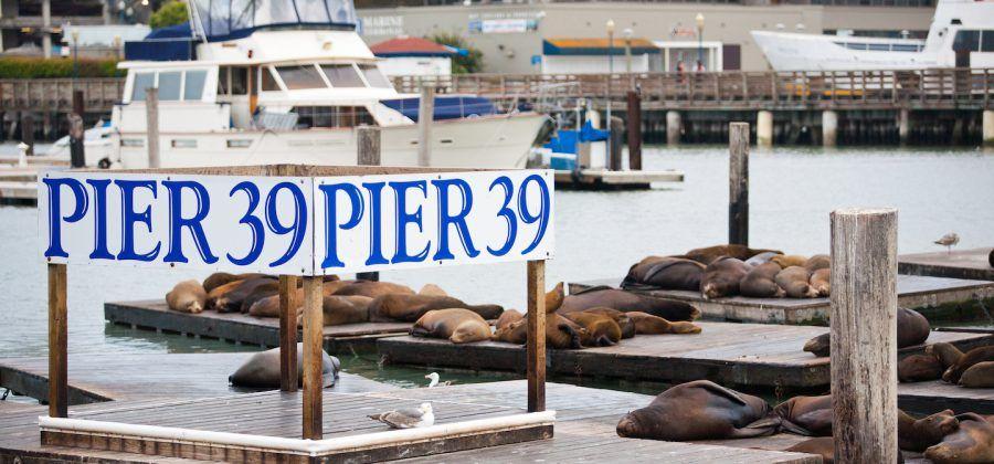 Best restaurants near fisherman's wharf in San Francisco